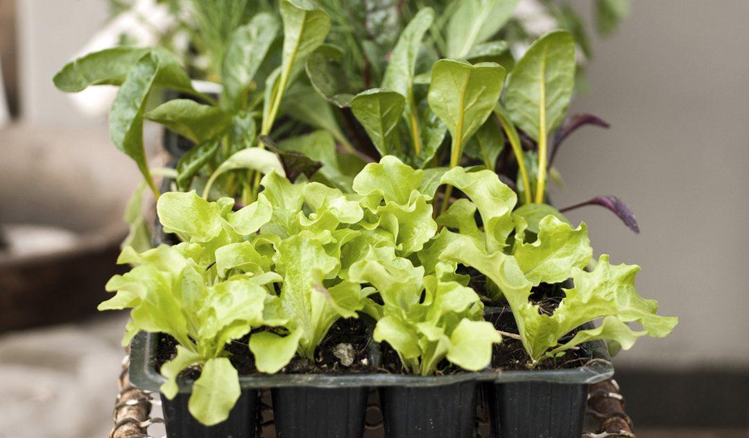 Do jardim para a mesa: um benefício da vida no campo